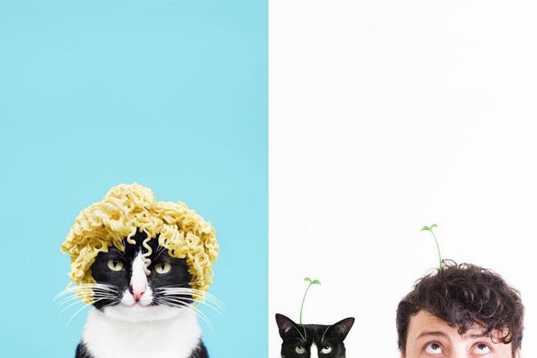 猫界的公主!猫奴一定要 follow 这只可爱又搞怪的猫咪